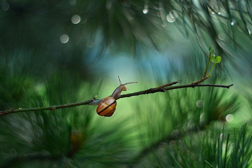 Rain-Story-575fbbb175f8c