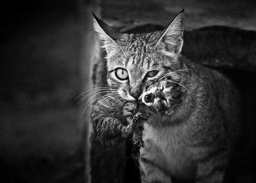 Hayvanları Koruma Günü