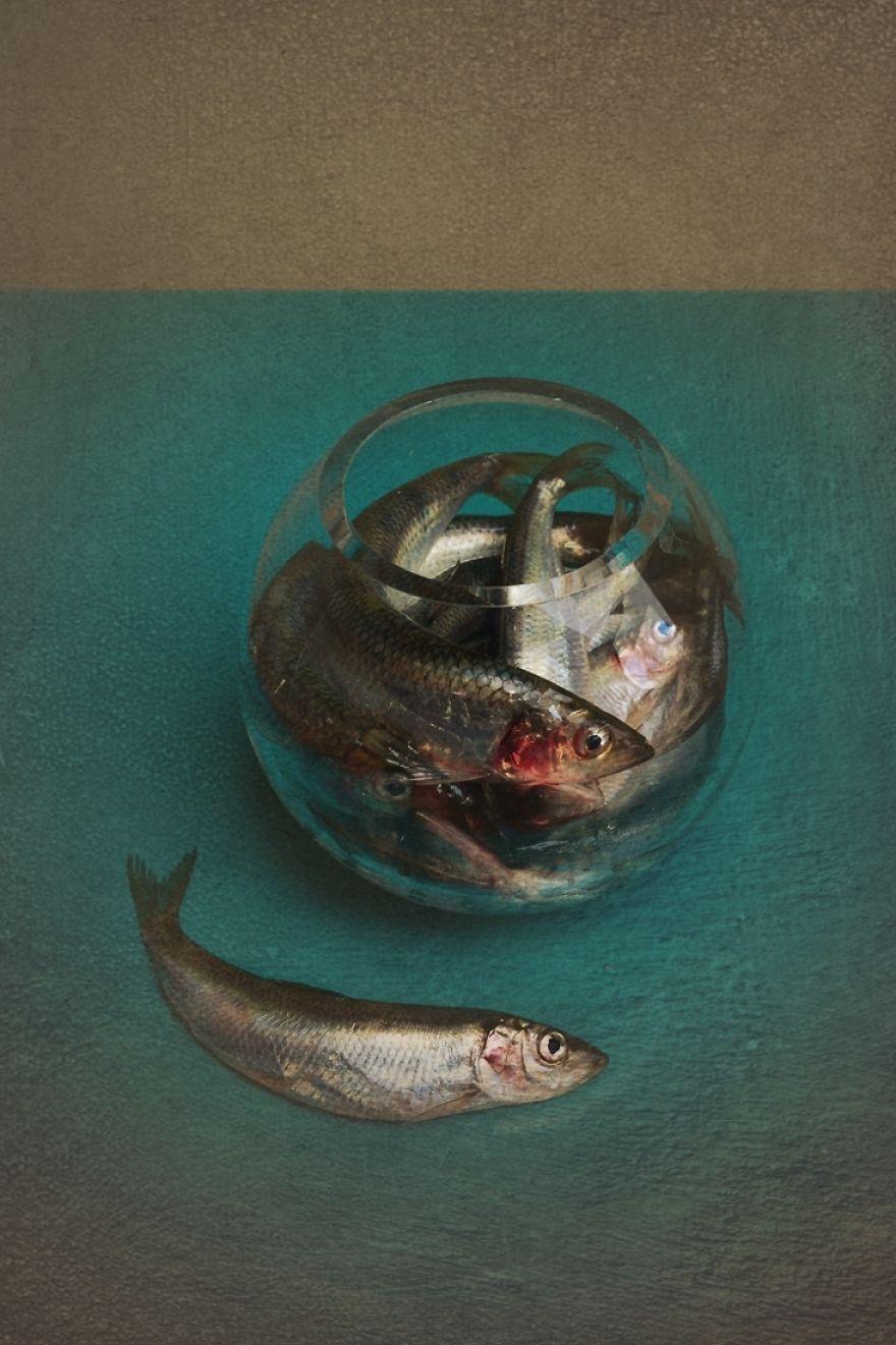 Balık Fotoğrafları