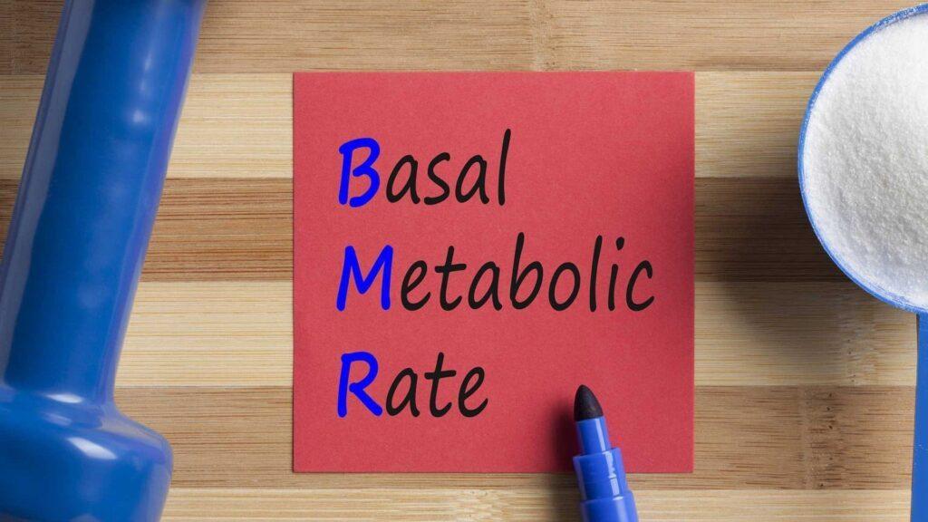 Bazal Metabolizma Nedir?